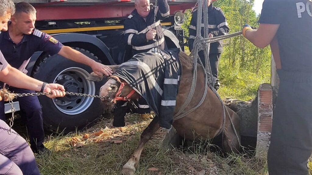 Intervenție a pompierilor ialomițeni pentru salvarea unui cal. FOTO ISU Ialomița