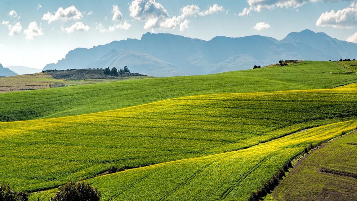 teren agricol